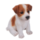 Pet Pal Jack Russell Puppy