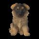 Pet Pal Alsatian Puppy