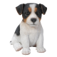 Pet Pal Jack Russell Puppy Tri-Colour
